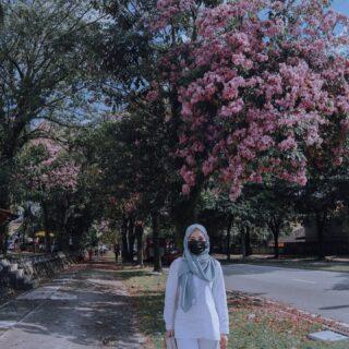 'sakura season' with Tecoma trees 😁  #tecomatreeinmalaysia #sakuravibes #love